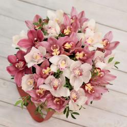 27 орхидей